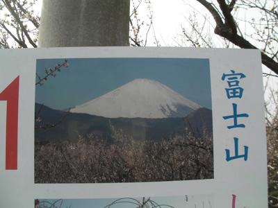 雲がなければこんな富士山が!